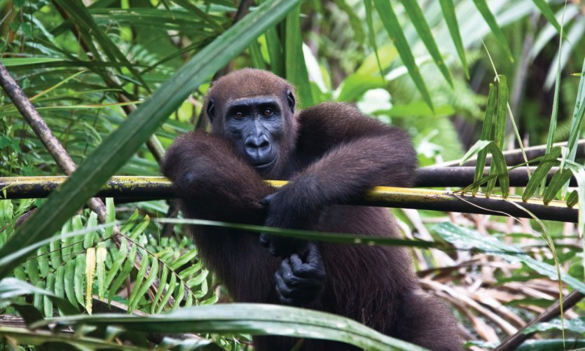 Tour du Gabon