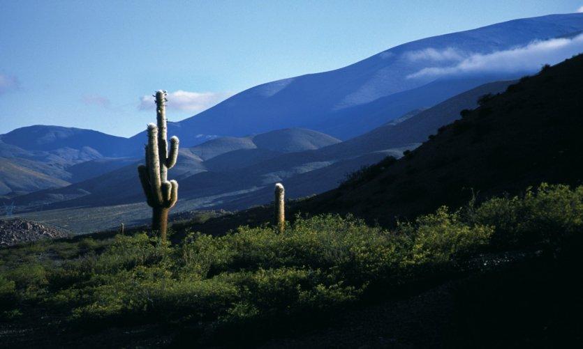 Parc National Los Cardones.