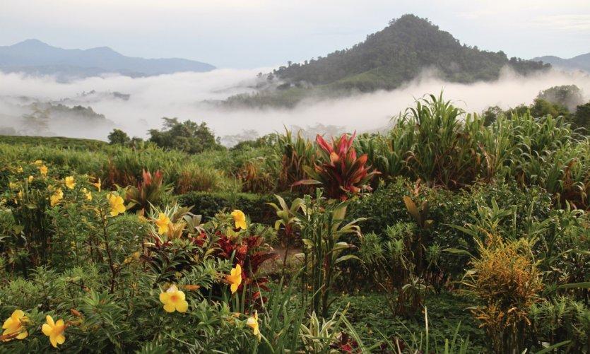 Jardins de la plantation de thé Sabah Tea Plantation