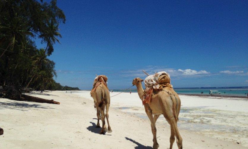 Balade à dos de chameaux en face du Water Lovers beach resort.