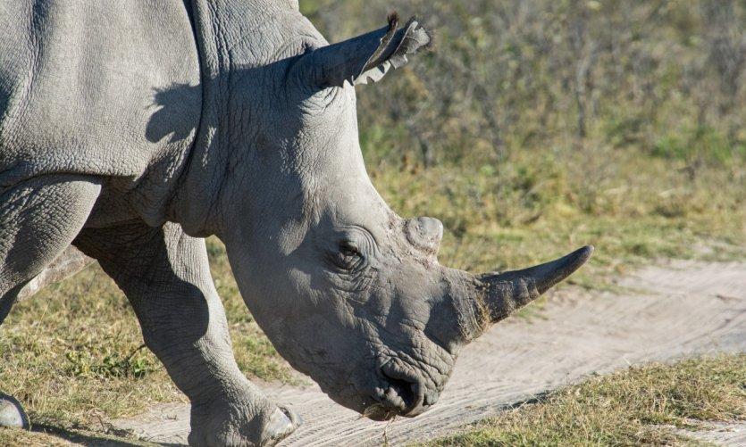 Khama Rhino Sanctuary.