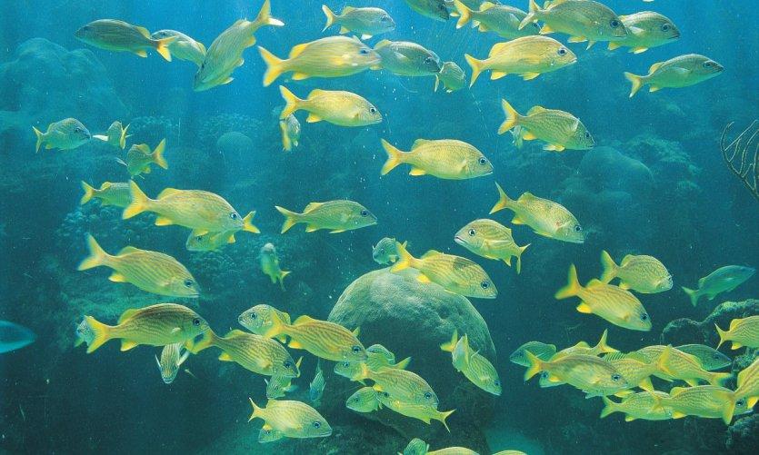 Découvrez la faune sous-marine de Varadero.