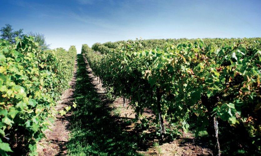 Vignoble de Gascogne