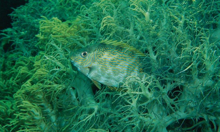 Seabed off Tubbataha Reef.