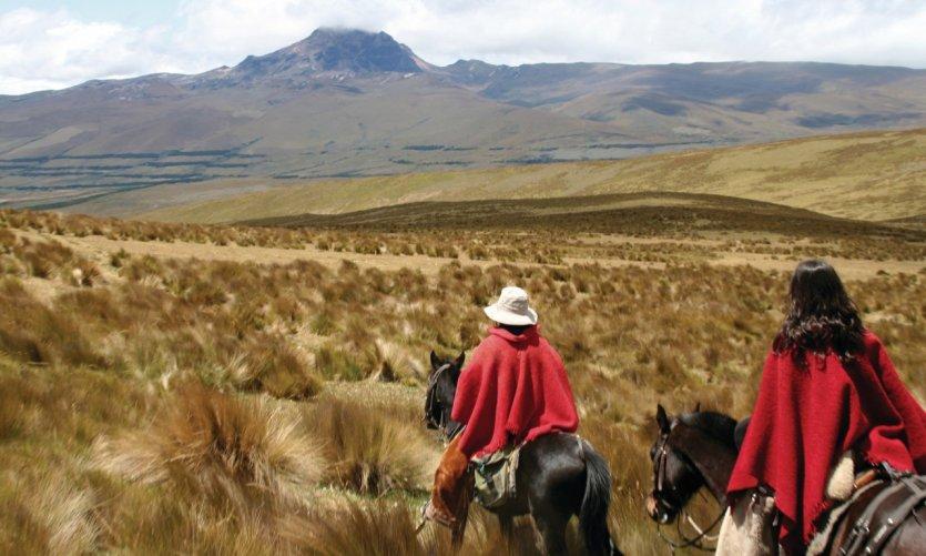 Alpagas sur les flancs du Cotopaxi.