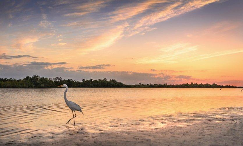 Marco Island.