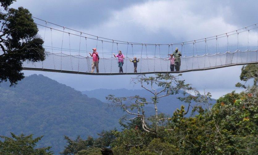 Pont suspendu dans la forêt de Nyungwe.