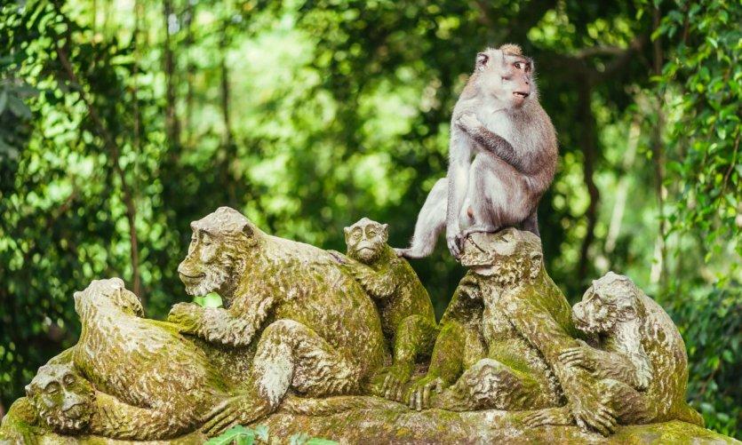 Forêt sacrée des singes.