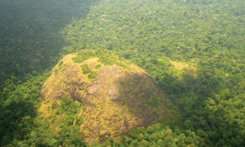 Vol au-dessus de la forêt surinamaise.