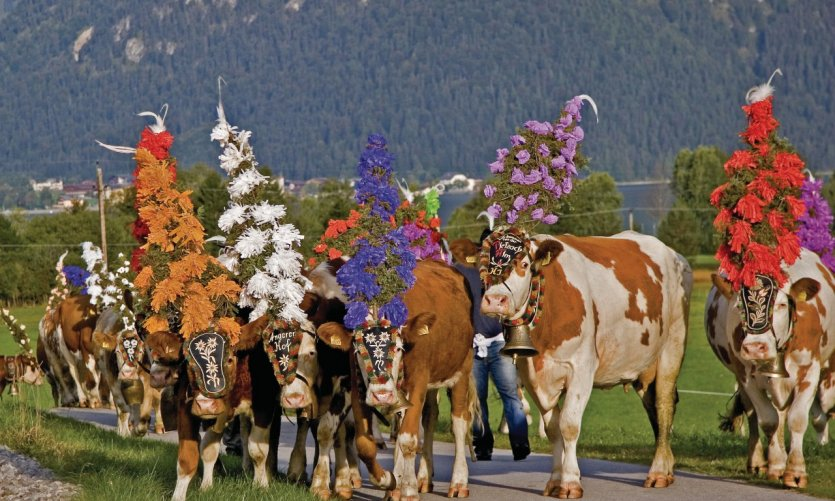 Almabtrieb (descente des vaches des alpages), une tradition suivie en Autriche.