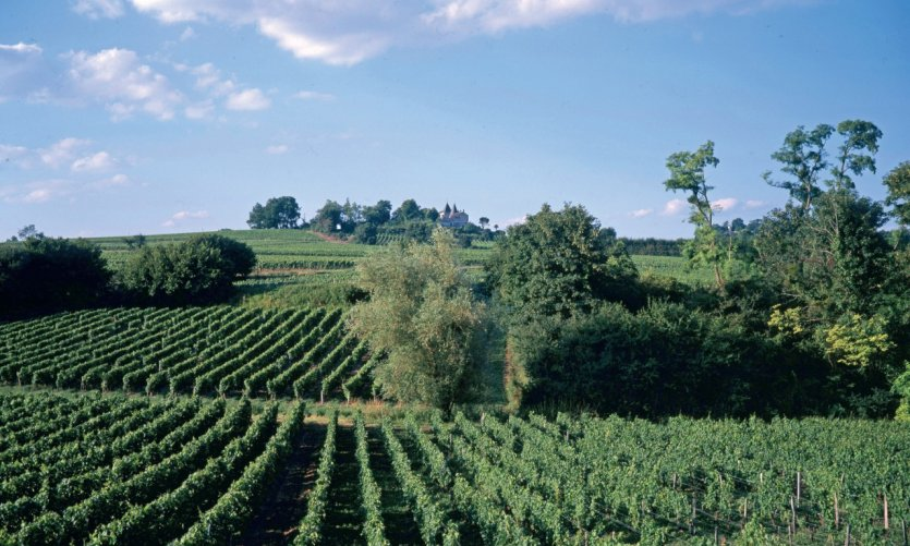 Le vignoble de Fronsac.