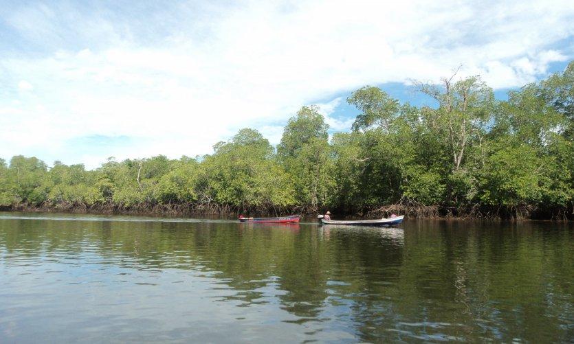 <p>Mangrove dans la Baie de Jiquilisco.</p>