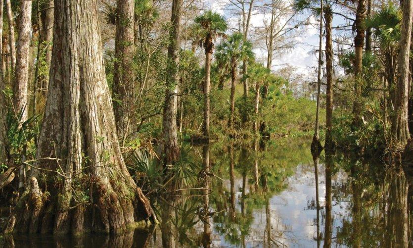 Mangrove de los Everglades.