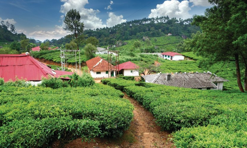 <p>Plantation de thé à Munnar.</p>