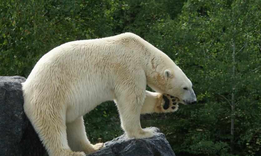 <p>Zoo sauvage de Saint-Félicien.</p>