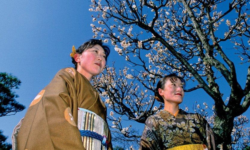 O-Hanami, on se rassemble sous les arbres pour admirer les fleurs.