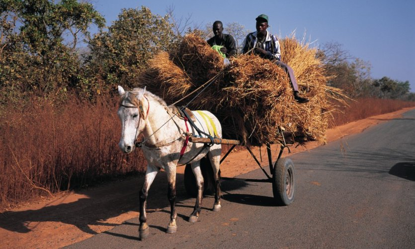 <p>Charrette a caballo cerca de Ziguinchor.</p>