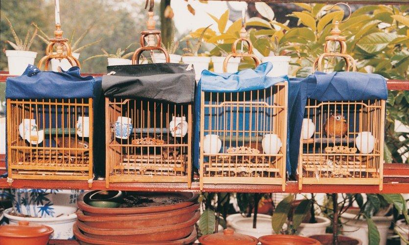 Au marché aux oiseaux de Canton.