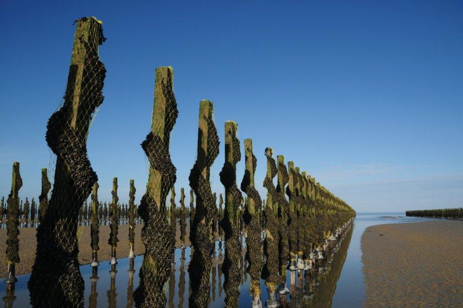 Bouchots en baie de Jersey. (© Alan_Lagadu - iStockphoto))