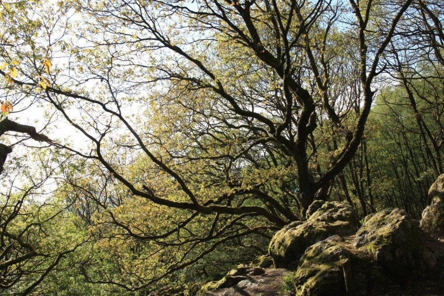 Forêt de Multonne. (© Parc naturel régional Normandie-Maine))