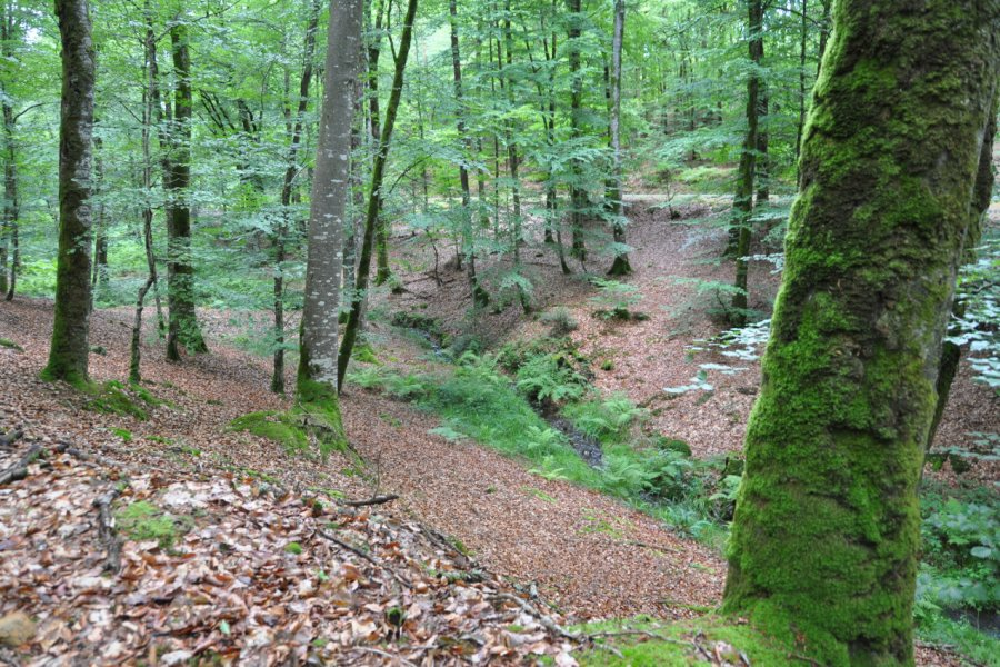 Forêt de Perseigne. (© Parc naturel régional Normandie-Maine))