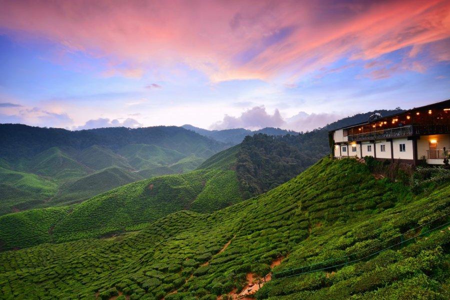 Plantation de thé des Cameron Highlands. (© Fiz_zero / Shutterstock.com))