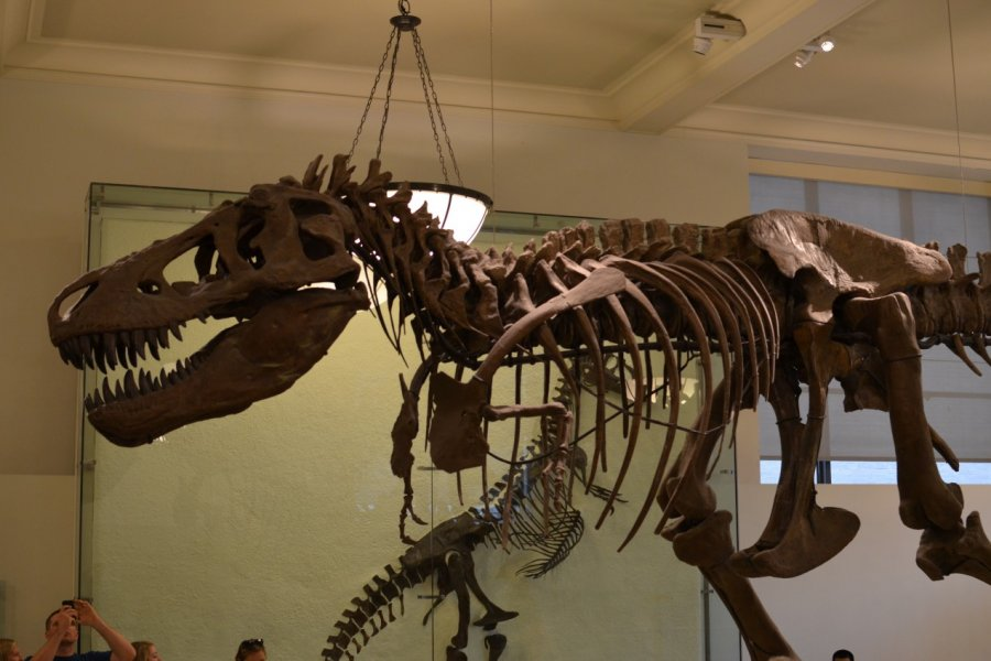 American Museum of Natural History. (© Ambre POURREAU))