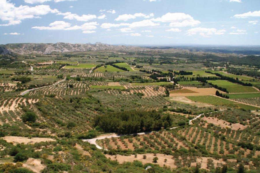 La chaîne des Alpilles et ses champs d'oliviers près des Baux-de-Provence. (© Stéphan SZEREMETA))