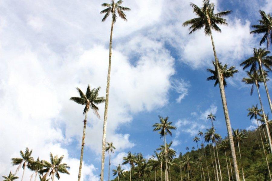 Paysage du Quindio. (© ToniFlap - iStockphoto))