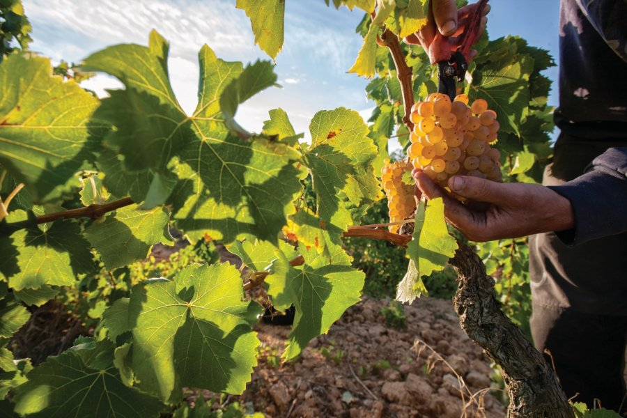 Une terre de vignobles. (© Patronat Turisme Diputació Tarragona - Terres de l'Ebre))