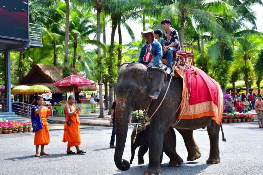 Promenade à dos d'éléphant, Nong Nooch Tropical Garden. (© Santi.m - Shutterstock.com))