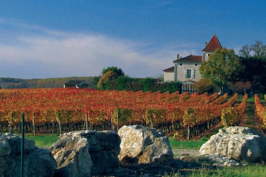 Domaine viticole dans le Lot-et-Garonne (© JIMJAG - FOTOLIA))