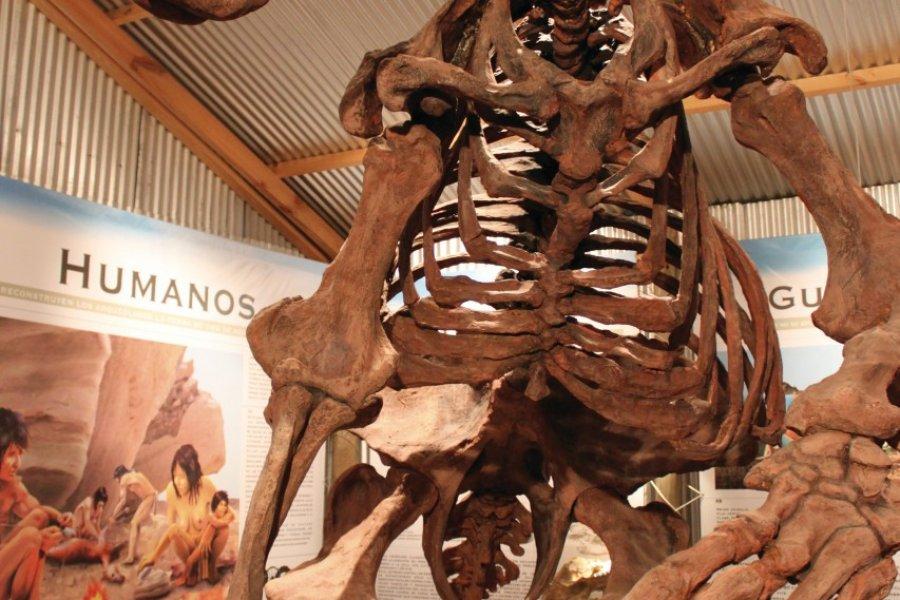 Squelette du Megaterio au Centro Interpretativo Histórico Calafate. (© Pierre-Yves SOUCHET))