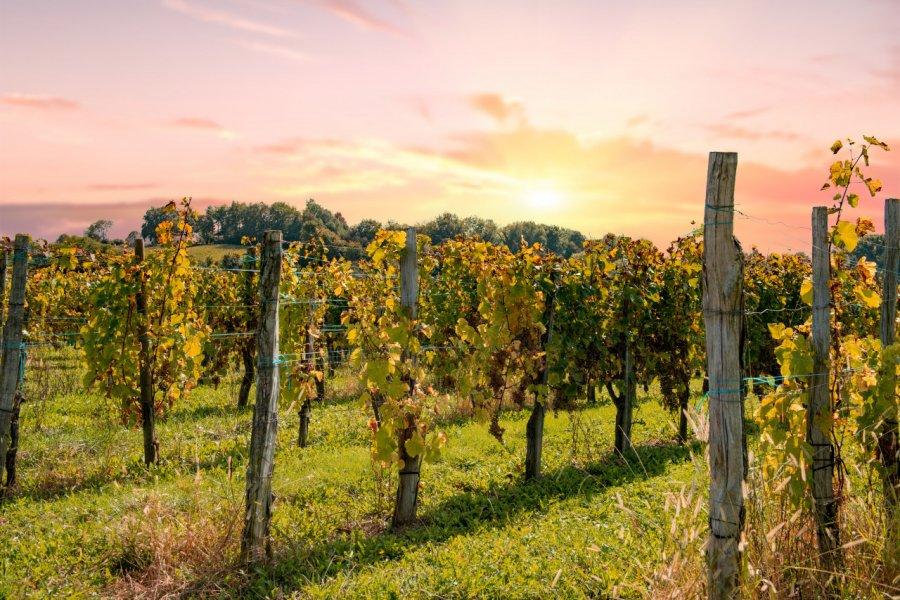 Vignoble de Jurançon. (© Philipimage - stock.adobe.com))
