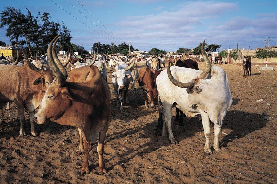 Marché aux bestiaux de Dakar. (© Tom Pepeira - Iconotec))