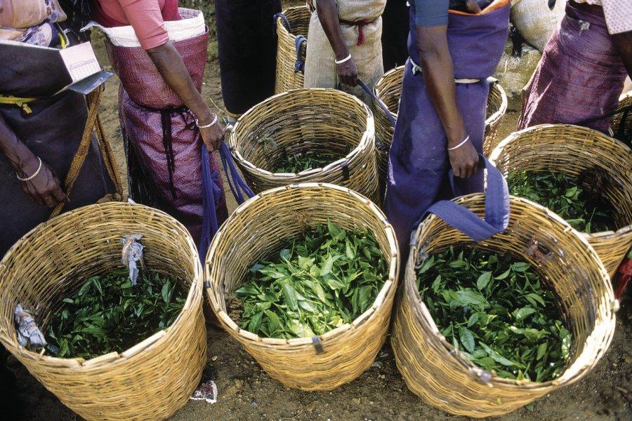 Récolte du thé (© Eric Martin - Iconotec))