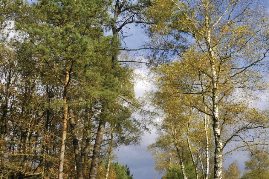 La forêt de Sillé-le-Guillaume en automne (© Christian MUSAT - Fotolia))