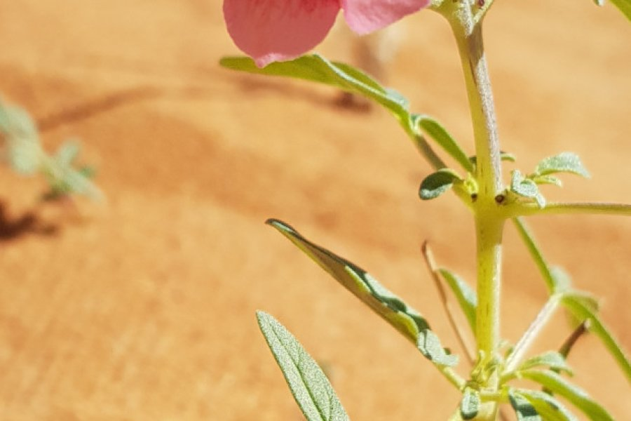 Flore du désert. (© Sylvain Philip))