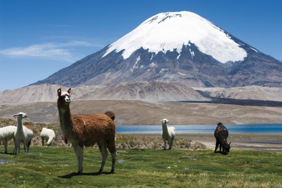 Volcan Parinacota. (© renelo))
