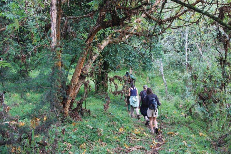 Randonnée dans le Mgahinga National Park. (© Abdesslam Benzitouni))