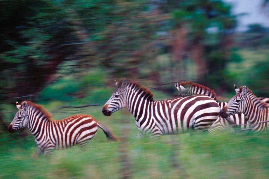 Zèbres (© Tanzania Tourist Board))
