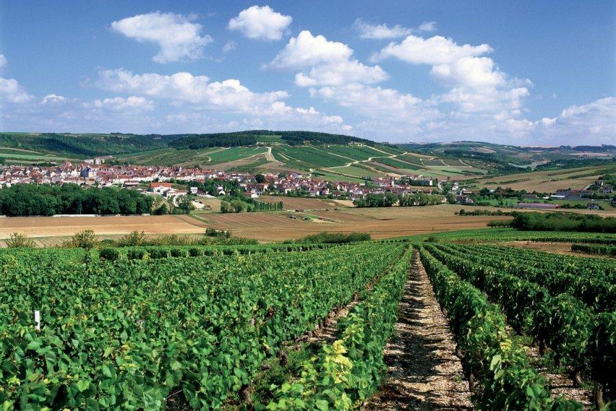 Vignoble de Chablis. (© AM stock nature))