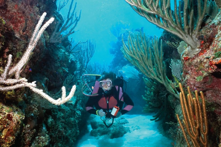Plongée sous-marine. (© dsabo))