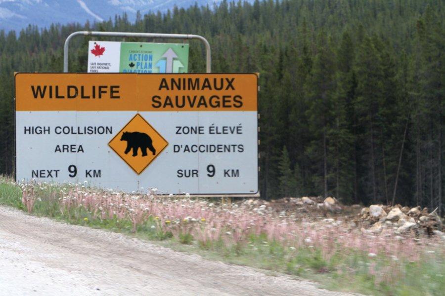 Panneaux routiers signalant des animaux sauvages. (© Stéphan SZEREMETA))