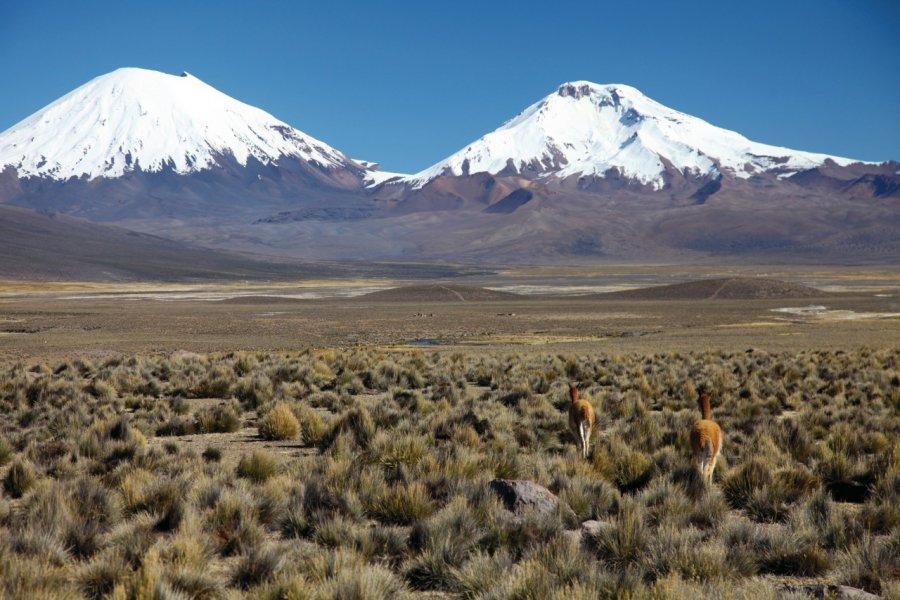 Les volcans Parinacota et Pomerape, vus depuis le village de Sajama. (© Arnaud BONNEFOY))