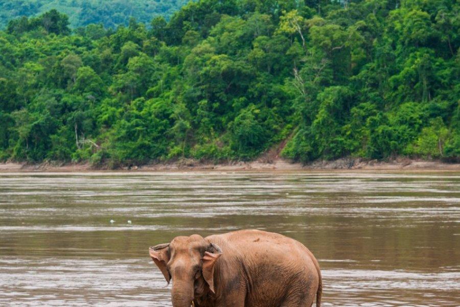 Un éléphant va prendre son bain dans le Mékong. (© Hang Dinh - Shutterstock.com))