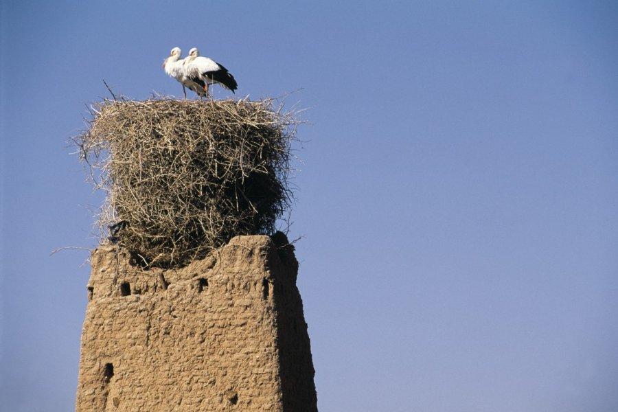 Cigogne sur ksar en pisé. (© Atamu RAHI - Iconotec))