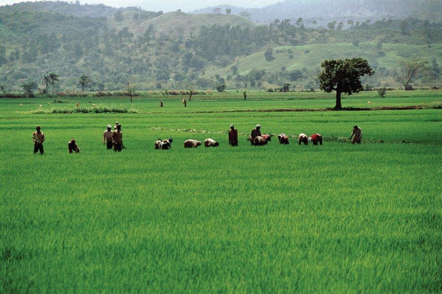 Rizières de la vallée de Cibao. (© Author's Image))