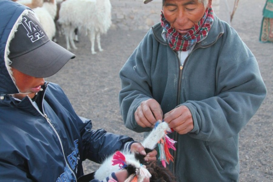 La vie quotidienne dans l'altiplano de Sajama. (© Arnaud BONNEFOY))