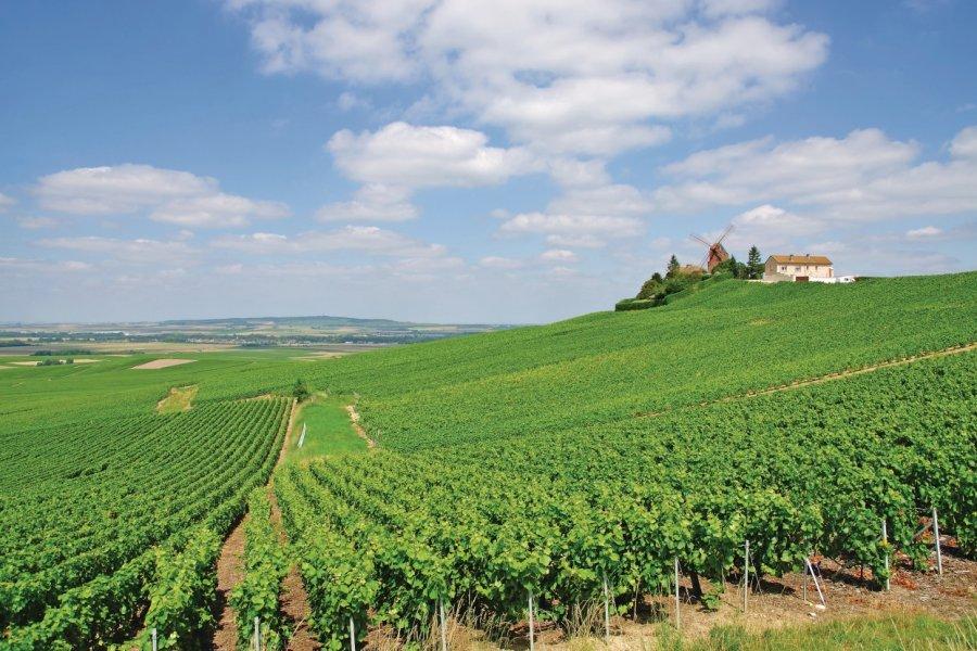 Vignoble de Verzenay (© travelpeter - Fotolia))